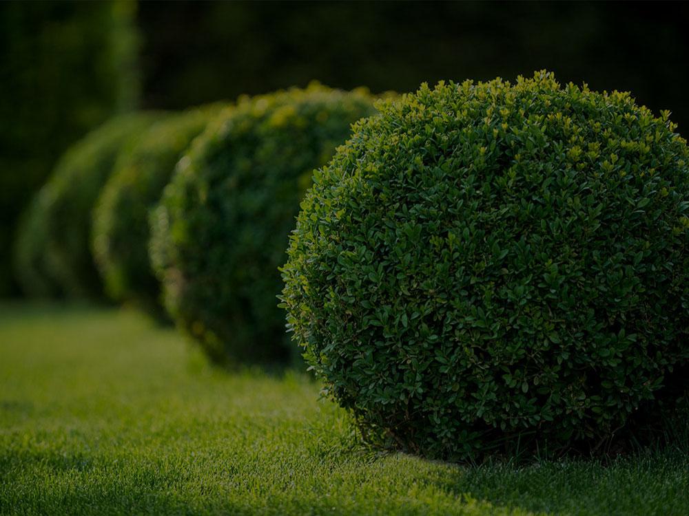 Orleans Landscaping